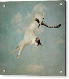 Flying Cat Acrylic Print by Sally Banfill