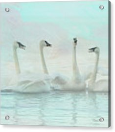 Four Swans Watercolor Group Acrylic Print by Patti Deters