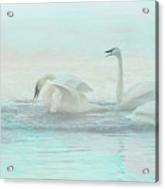 Four Swans Watercolor Group Play Acrylic Print by Patti Deters