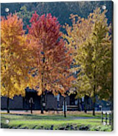 Four Tree Lineup Acrylic Print by Dan Friend