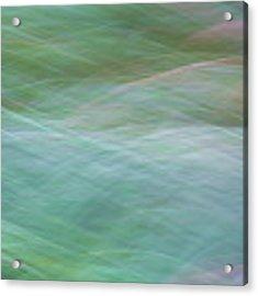 Grasses Acrylic Print by Brad Bellisle