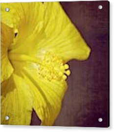 Hibiscus Yellow Acrylic Print by Carolyn Marshall