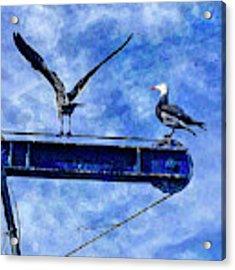 High Diving Gulls Acrylic Print by Rhonda Strickland