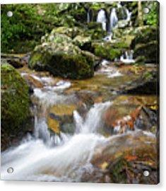Hogcamp Branch Falls I Acrylic Print by William Dickman