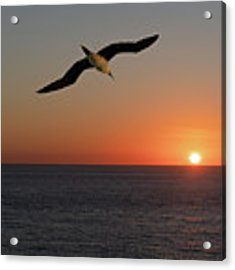 Into The Setting Sun Acrylic Print by William Dickman
