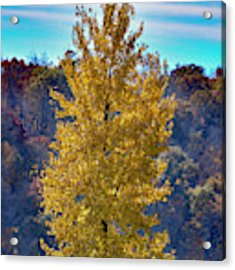 Jogger On Trail In Fall Acrylic Print by Dan Friend
