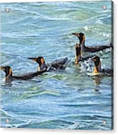 King Penguins Swimming Acrylic Print by Alan M Hunt