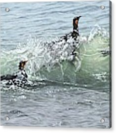 King Penguins Swimming In The Waves Acrylic Print by Alan M Hunt