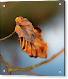 Last Leaves Of Autumn Acrylic Print by Scott Lyons