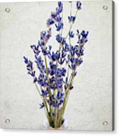 Lavender Acrylic Print by Nicole Young