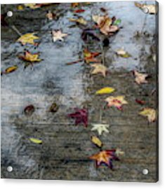Leaves In The Rain Acrylic Print by Alison Frank