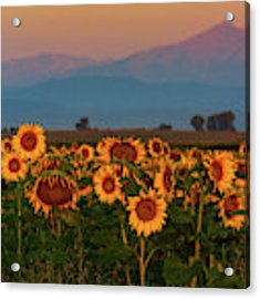 Light Of The Sunflowers Acrylic Print by John De Bord