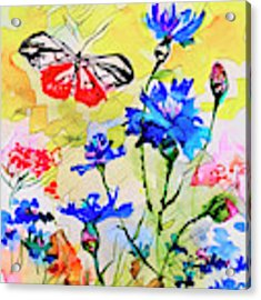 Modern Floral Art Butterfly Cornflowers Acrylic Print by Ginette Callaway