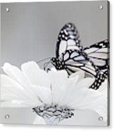 Monarch In Infrared 5 Acrylic Print by Brian Hale