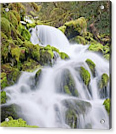 Mossy Falls Acrylic Print by Nicole Young