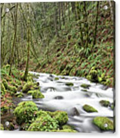 Mossy Stream Acrylic Print by Nicole Young
