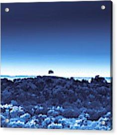 One Tree Hill - Blue - 3 Acrylic Print by Darryl Dalton