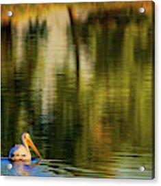 Pelican In Sunlight Acrylic Print by John De Bord