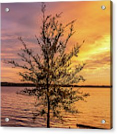 Percy Priest Lake Sunset Young Tree Acrylic Print by D K Wall