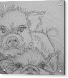 Photo Bomber Sketch Acrylic Print by Jani Freimann