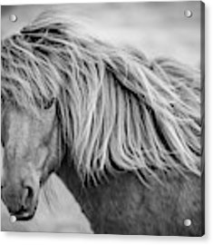 Portrait Of Icelandic Horse In Black And White Acrylic Print by Gigi Ebert