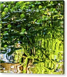 Reflections In Green Acrylic Print by Kate Brown