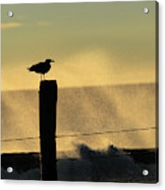Seagull Silhouette On A Piling Acrylic Print by William Dickman