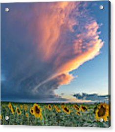 Storm Clouds And Sunflowers  Acrylic Print by Rand