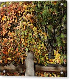 Summers End Acrylic Print by Ann E Robson