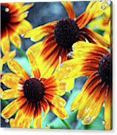 Sunflower Flame Acrylic Print by Cynthia Guinn