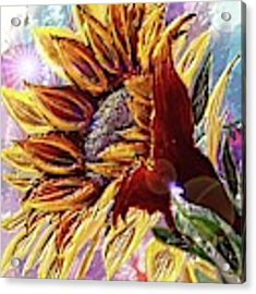 Sunflower In The Sun Acrylic Print by Darren Cannell