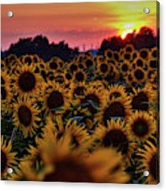 Sunflower Sunset 001 Acrylic Print by Lance Vaughn