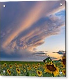 Sunflowers And Storm Clouds Acrylic Print by Rand
