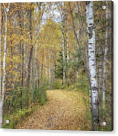 The Golden Path Acrylic Print by Susan Rissi Tregoning