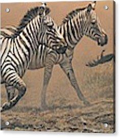 The Race - Zebras Acrylic Print by Alan M Hunt
