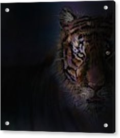 Tiger In The Dark Acrylic Print by Darren Cannell