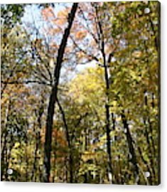 Transitioning Merwin Canopy Acrylic Print by Dylan Punke