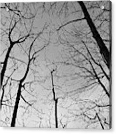 Tree Series 2 Acrylic Print by Jeni Gray