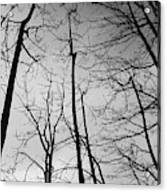 Tree Series 3 Acrylic Print by Jeni Gray