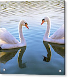 Two Of Them Acrylic Print by Rima Biswas