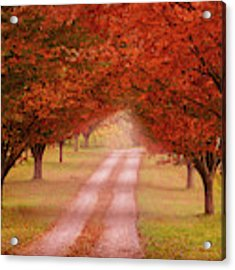 Way To The Farm Acrylic Print by Rima Biswas