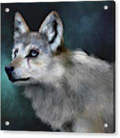 Wolf Art Acrylic Print by Angela Murdock