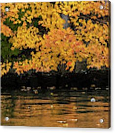 Yellow On Water Acrylic Print by Dan Friend