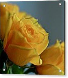 Yellow Roses Acrylic Print by Ann E Robson