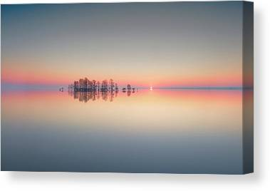 Bald Cypress Canvas Prints