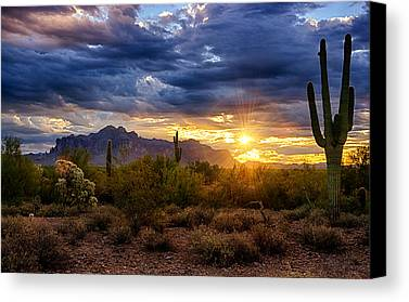 Cactus Photographs Limited Time Promotions