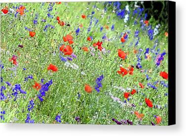 Floral Digital Art Digital Art Limited Time Promotions
