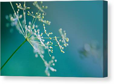 Herbs Canvas Prints