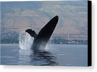 Whale Limited Time Promotions