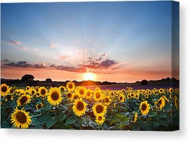 Colorful Sunflower Canvas Prints